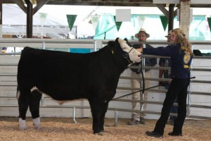 Rob the Heartthrob Market Steer and owner Gabrielle Alley