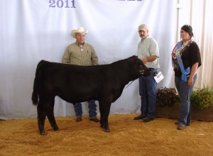 MFS Goldmaster 9Y of Matheson Farms was Reserve Grand Champion Bull at the Puyallup Fair 2011