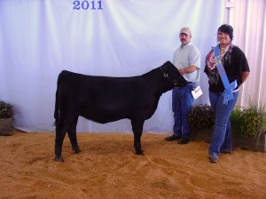MFS Serena 33Y of Matheson Farms was the heifer Calf Champion at the Puyallup Fair 2011